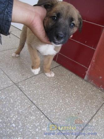dunia anjing jual anjing lainnya mix breed   pupies