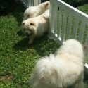 Bebas Bermain dengan Pagar yang Ramah Anjing