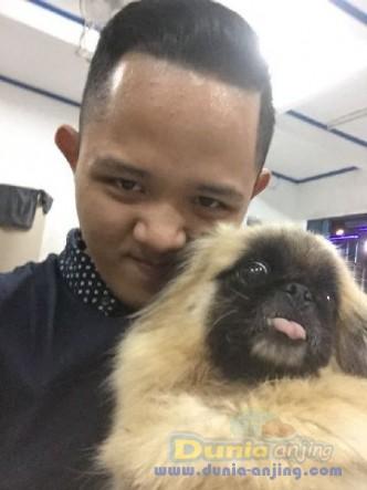 Jual Anjing Pekingese  - Pekingese Betina Istimewa Foto Ketiga
