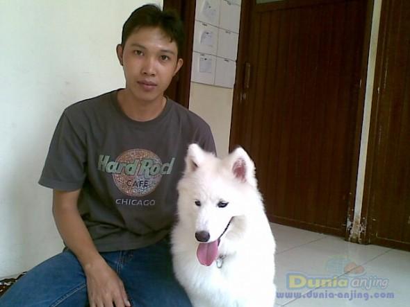 Pejantan Anjing Golden Retriever Stud Service  - Pelatih Anjing Datang Kerumah Foto Utama